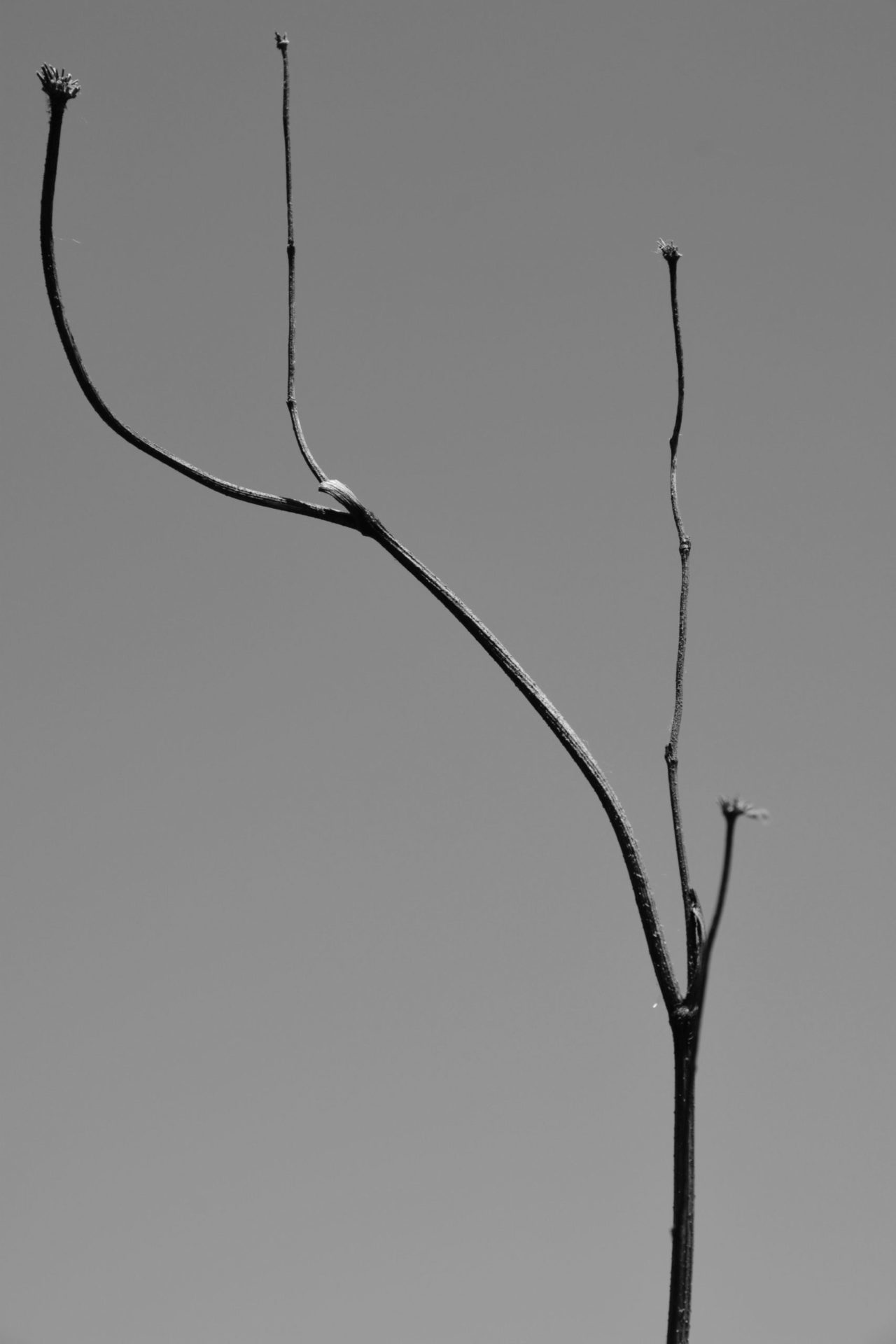Manuel Frattini, Pflanze 2019, Courtesy the artist